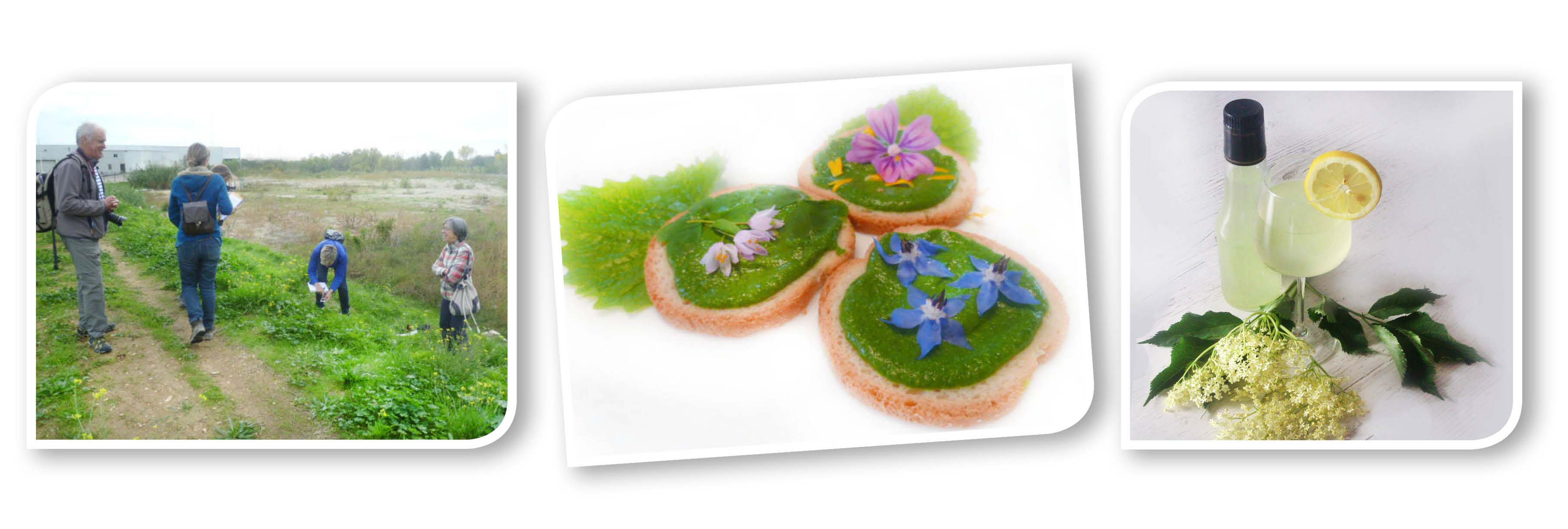 FRISE WEB 07 10 repas.jpg